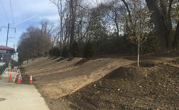 Newly planted trees and erosion control blanket (November 2017)